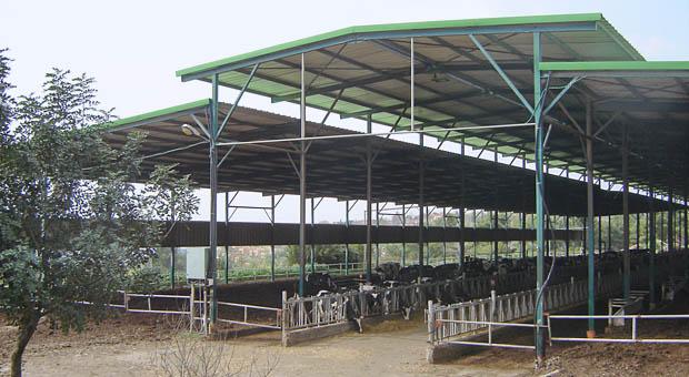 Open stallen maakt koeien zichtbaar
